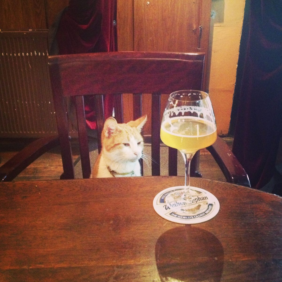 Gollem Amsterdam - a great place for craft beer - even the kitty likes it