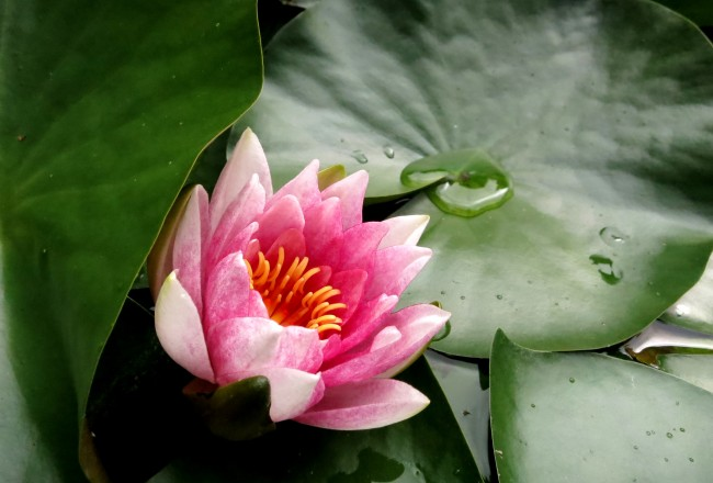 waterlily open tuinen dag amsterdam
