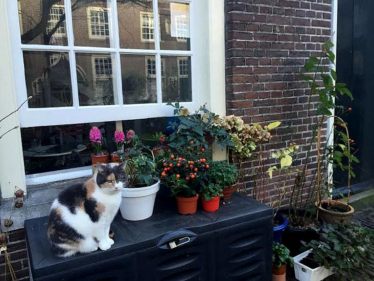 Discover the hidden hofjes in the Jordaan. The cute courtyards surrounded by pretty buildings are quiet oases in Amsterdam.