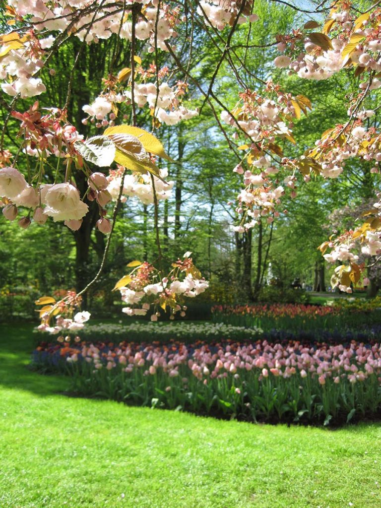 10 Day Trips from Amsterdam in Spring - Keukenhof